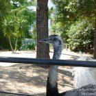 #CotedAzurFrance / Alpes-Maritimes (06) / Nice / Parcs & Jardins / Visite du Parc Phoenix à Nice. Vivez toutes les couleurs de la nature ! – Photo n°86
