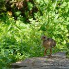 #CotedAzurFrance / Alpes-Maritimes (06) / Nice / Parcs & Jardins / Visite du Parc Phoenix à Nice. Vivez toutes les couleurs de la nature ! – Photo n°94