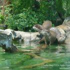 #CotedAzurFrance / Alpes-Maritimes (06) / Nice / Parcs & Jardins / Visite du Parc Phoenix à Nice. Vivez toutes les couleurs de la nature ! – Photo n°99
