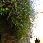 #CotedAzurNow / Alpes-Maritimes (06) / Eze Village / Agenda événementiel / Manifestations & Festivités / Les Médiévales d'Eze – 29 et 30 juillet 2017 – Photo n°56