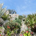 #CotedAzurNow / French Riviera / Principauté de Monaco / Parcs & Jardins / Jardin Exotique Monaco – Septembre 2017 – Photo n°36