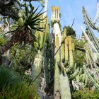#CotedAzurNow / French Riviera / Principauté de Monaco / Parcs & Jardins / Jardin Exotique Monaco – Septembre 2017 – Photo n°38