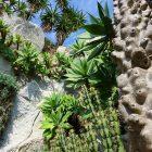 #CotedAzurNow / French Riviera / Principauté de Monaco / Parcs & Jardins / Jardin Exotique de Monaco – Septembre 2017 – Photo n°4