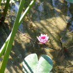 #CotedAzurNow / Alpes-Maritimes (06) / Menton / Parcs & Jardins / Jardin Maria Serena – Menton – Septembre 2017 – Photo n°13