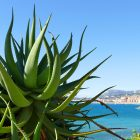 #CotedAzurNow / Alpes-Maritimes (06) / Menton / Parcs & Jardins / Jardin de la Villa Maria Serena – Menton – Septembre 2017 – Photo n°26