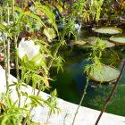 #CotedAzurNow / Alpes-Maritimes (06) / Menton / Parcs & Jardins / Jardin de la Villa Maria Serena – Menton – Septembre 2017 – Photo n°31