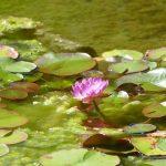 #CotedAzurNow / Alpes-Maritimes (06) / Menton / Parcs & Jardins / Serre de la Madone – Menton – Septembre 2017 – Photo n°30