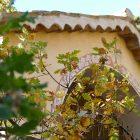 Côte d'Azur / Alpes-Maritimes (06) / Arrière-Pays / Villages des Balcons de l'Estéron – Mont Vial et Village de Revest (06830) – Photo n°23