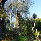 Alpes-Maritimes (06) / Menton / Parcs & Jardins / Jardin botanique exotique du Val Rahmeh – Jardin remarquable – Menton – Février 2018 – Photo n°23