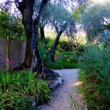 Alpes-Maritimes (06) / Menton / Parcs & Jardins / Jardin botanique exotique du Val Rahmeh – Jardin remarquable – Menton – Février 2018 – Photo n°24