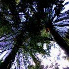 Alpes-Maritimes (06) / Menton / Parcs & Jardins / Jardin botanique exotique du Val Rahmeh – Jardin remarquable – Menton – Février 2018 – Photo n°25