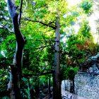 Alpes-Maritimes (06) / Menton / Parcs & Jardins / Jardin botanique exotique du Val Rahmeh – Jardin remarquable – Menton – Février 2018 – Photo n°27
