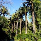 Alpes-Maritimes (06) / Menton / Parcs & Jardins / Jardin botanique du Val Rahmeh – Jardin remarquable – Menton – Février 2018 – Photo n°3