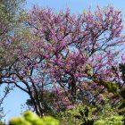 Côte d'Azur / Alpes-Maritimes (06) / Parcs naturels départementaux / Espaces naturels protégés / Nice – Parc du Vinaigrier – Photo n° 06