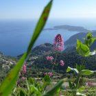 Côte d'Azur / Alpes-Maritimes (06) / Parcs naturels départementaux / Espaces naturels protégés / Parc de la Grande Corniche – Photo n° 07