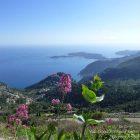 Côte d'Azur / Alpes-Maritimes (06) / Parcs naturels départementaux / Espaces naturels protégés / Parc de la Grande Corniche – Photo n° 08