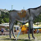 Alpes-Maritimes / Arrière-pays / Festivités / Escragnolles (06460) / Fête aux ânes à Escragnolles – Dimanche 26 juin 2016 – Photo n°2