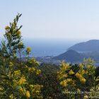 Région Paca / Côte d'Azur / French Riviera / Massif du Tanneron / Balade dans le Tanneron – Randonnée – Circuit du Grand Duc – Photo n°10