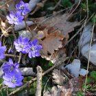 #Alpes-Maritimes (06) / Moyen pays / Saint-Auban / Côté Nature / Outdoor / Randonnée Saint-Auban (06850) – Photo n°27