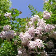 #CotedAzurFrance / Alpes-Maritimes (06) / Nice / Parcs & Jardins / Jardin Botanique de la Ville de Nice – Corniche Fleurie – Botanical Garden of Nice – Photo n°10