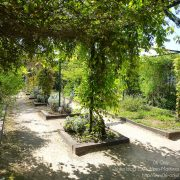 #CotedAzurFrance / Alpes-Maritimes (06) / Nice / Parcs & Jardins / Jardin Botanique de Nice – Corniche Fleurie – Botanical Garden of Nice – Photo n°23