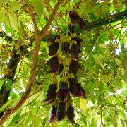 #CotedAzurFrance / Alpes-Maritimes (06) / Nice / Parcs & Jardins / Jardin Botanique de Nice – Corniche Fleurie – Botanical Garden of Nice – Photo n°24