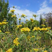 #CotedAzurFrance / Alpes-Maritimes (06) / Nice / Parcs & Jardins / Jardin Botanique de Nice – Corniche Fleurie – Botanical Garden of Nice – Photo n°26