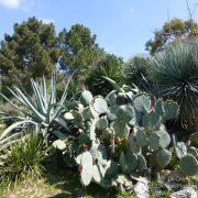 #CotedAzurFrance / Alpes-Maritimes (06) / Nice / Parcs & Jardins / Jardin Botanique de Nice – Corniche Fleurie – Botanical Garden of Nice – Photo n°27