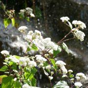 #CotedAzurFrance / Alpes-Maritimes (06) / Nice / Parcs & Jardins / Jardin Botanique de la Ville de Nice – Corniche Fleurie – Botanical Garden of Nice – Photo n°6