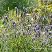 #CotedAzurFrance / Alpes-Maritimes (06) / Nice / Parcs & Jardins / Jardin Botanique de la Ville de Nice – Corniche Fleurie – Botanical Garden of Nice – Photo n°8