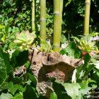 #CotedAzurFrance / Alpes-Maritimes (06) / Gattières / Visites & Découvertes  / Parcs & Jardins / Le Jardin des fleurs de poterie –  Labellisé Jardin remarquable – Photo n° 1