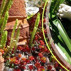 Le Jardin des fleurs de poterie