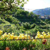 Jardins communaux – Le Mas 06