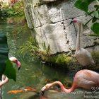#CotedAzurFrance / Alpes-Maritimes (06) / Nice / Parcs & Jardins / Visite du Parc Phoenix à Nice. Vivez toutes les couleurs de la nature ! – Photo n°54