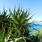 #CotedAzurNow / Alpes-Maritimes (06) / Menton / Parcs & Jardins / Jardin de la Villa Maria Serena – Menton – Septembre 2017 – Photo n°25