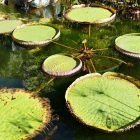 #CotedAzurNow / Alpes-Maritimes (06) / Menton / Parcs & Jardins / Jardin de la Villa Maria Serena – Menton – Septembre 2017 – Photo n°29