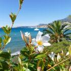 #CotedAzurNow / Alpes-Maritimes (06) / Menton / Parcs & Jardins / Jardin de la Villa Maria Serena – Menton – Septembre 2017 – Photo n°37
