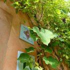 #CotedAzurNow / Alpes-Maritimes (06) / Menton / Parcs & Jardins / Jardin Serre de la Madone – Menton – Septembre 2017 – Photo n°7