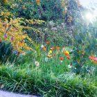 Alpes-Maritimes (06) / Menton / Parcs & Jardins / Jardin botanique exotique du Val Rahmeh – Jardin remarquable – Menton – Février 2018 – Photo n°16